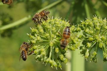 Ecole de Formation Apicole, cours et stage d'apiculture pour apiculteur débutant et confirmé